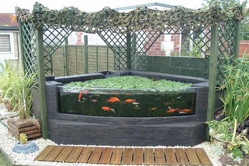 20+ Most Clever Above Ground Koi Pond with Window Ideas