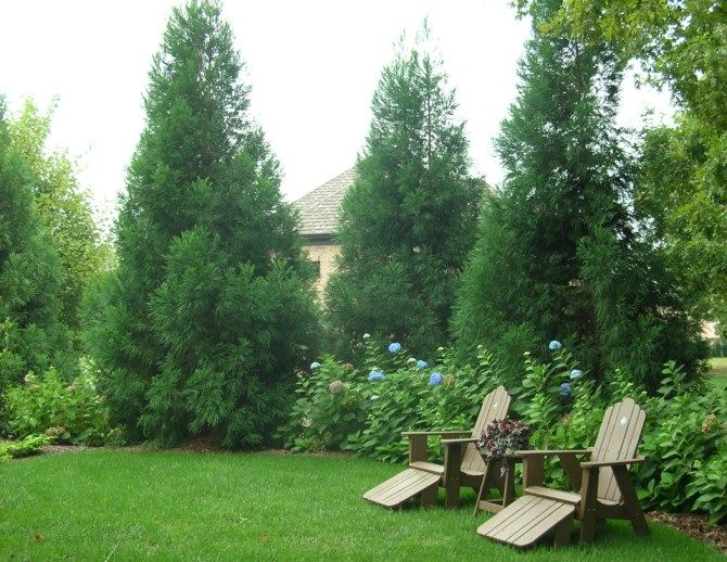 privacy landscape | Privacy Plantings | Gardening | Privacy