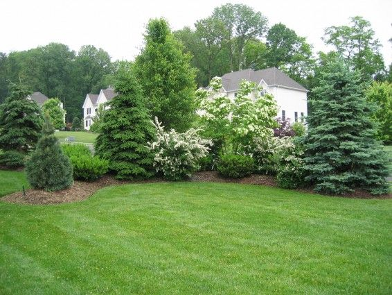 Pin by Debbie Peters on Honna | Privacy landscaping, Evergreen