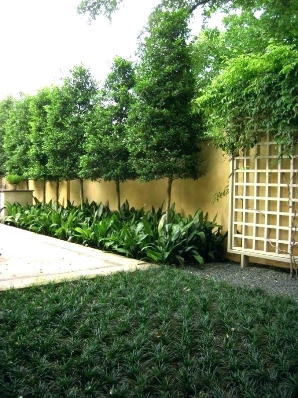 Backyard Privacy Landscaping Ideas Best    Backyard   Pinterest